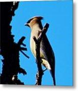Cedar Waxwing In Tree 030515aaa Metal Print