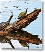 Happy Family Of Turtles Metal Print