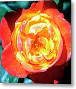 Celebration Rose Palm Springs Metal Print