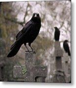 Cemetery Crows Metal Print