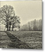 Cemetery Trees In The Fog E185 Metal Print