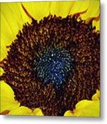 Center Of A Sunflower Metal Print