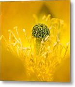 Center Of A Yellow Cactus Flower Metal Print