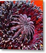 Center Of Attention  Metal Print