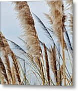 Central Coast Pampas Grass II Metal Print