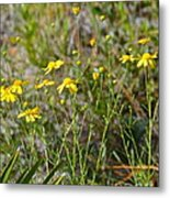 Central Florida Wildflowers Metal Print