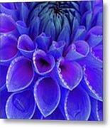 Centre Of Blue And Purple Dahlia Flower Metal Print
