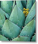 Century Plant And Tiny Blossom Metal Print