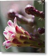 Cereus Hexagonus Pink Metal Print