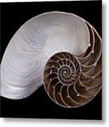 Chambered Nautilus Cross-section Metal Print