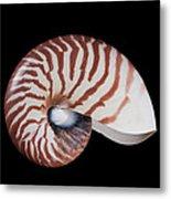 Chambered Nautilus Metal Print
