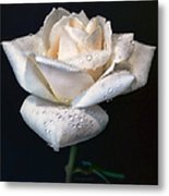 Champagne Rose Flower Macro Metal Print by Jennie Marie Schell