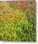 Changing Landscape I Metal Print