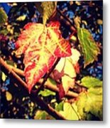 Changing Season Metal Print