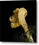 Chanterelle Mushroom Metal Print