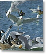 Chaotic Behavior Metal Print