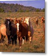 Charge Of The Mustangs  Metal Print by Jeanne  Bencich-Nations