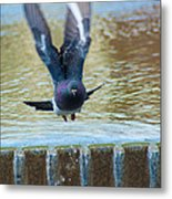 Charge Of The Pigeon Metal Print