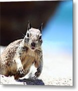 Charging Ground Squirrel Metal Print