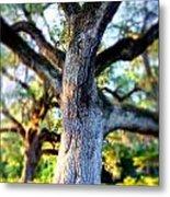Charleston Grand Oak At Sunset Metal Print