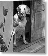 Charleston Shop Dog In Black And White Metal Print