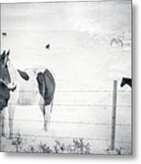 Charlie The Friendly Mare Metal Print