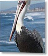 Charlie The Pelican Metal Print