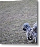 Chase The Ball Metal Print