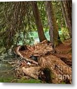 Cheakamus Lake Rainforest - British Columbia Metal Print