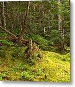 Cheakamus Rainforest Floor Metal Print