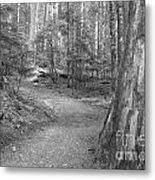 Cheakamus Trail In Black And White Metal Print