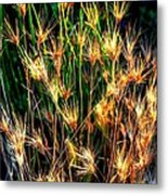 Cheat Grass 15750 Metal Print