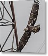 Check Out My Spots  Metal Print by Glenn Lawrence