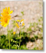 Checkered White Butterfly  Metal Print