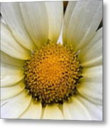 Cheery Daisy  Metal Print