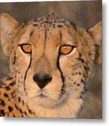 Cheetah Gaze At Sunset Metal Print
