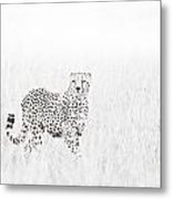Cheetah In The Grass Metal Print by Mike Gaudaur
