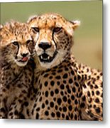 Cheetah Mother And Cub In Masai Mara Metal Print