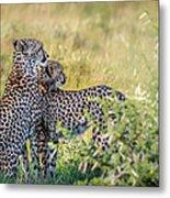 Cheetah Mother And Son Metal Print