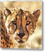 Cheetah One Metal Print