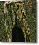 Cheetah Tree Perch Metal Print