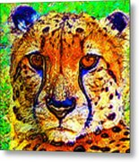 Face Of The Cheetah Metal Print