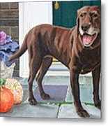 Chelsea At The Door Metal Print by Sandra Chase