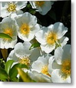 Cherokee Rose 2011 Metal Print
