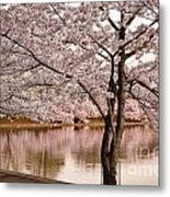 Cherry Basin Metal Print