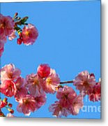 Cherry Blossom Against Blue Sky Metal Print