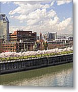 Cherry Blossom Along Portland Oregon Waterfront Panorama Metal Print