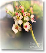 Cherry Blossom Flowers Metal Print