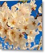 Cherry Blossom Macro Metal Print