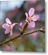 Cherry Blossom Pair Metal Print